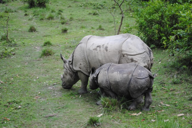 foto-11-rhino-with-baby